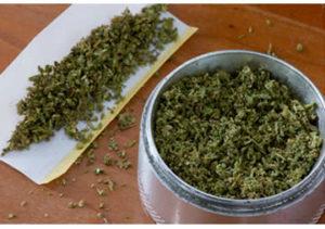 marijuana-essiccata