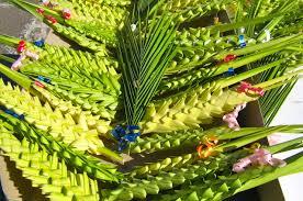 palme pasquali